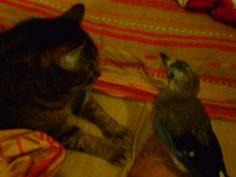 Birba e Pica » Fbsocialpet.com: il social forum per cani, gatti, cavalli, tutti gli animali