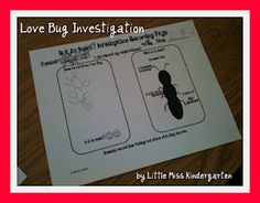 Love Bugs response chart