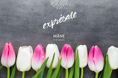 #sentimientos #tulipanes #tulipán #amor #amistad #14defebrero