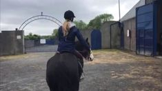 Horse Training: Chester Day 4 Horse Training, Chester, Horses, Pets, Instagram, Horse