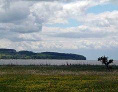 Impressionen von der Malreise nach Rügen   Boddenblick auf Groß Zicker (c) Frank Koebsch #wirsindinsel! #rügen