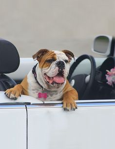 Like taking your doggie for a ride? Make sure to protect your seats with a luxury-quality, stylish pet car mat from GGBailey.com.