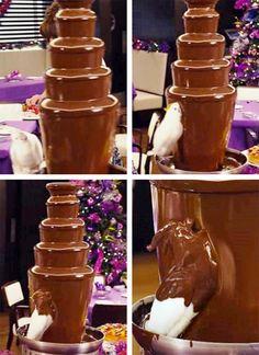 Genius cockatoo