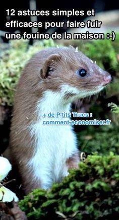 Les fouines sont des animaux plutôt mignons. Mais elles sont capables de faire de terribles dégâts...  Découvrez l'astuce ici : http://www.comment-economiser.fr/12-astuces-efficaces-pour-se-debarrasser-fouine-a-la-maison.html