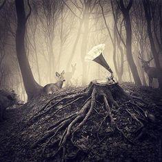 Sarolta Bán / Forest Music