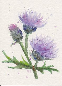 "'Thistle ATC'  (Artist Trading Cards are 3.5"" x 2.5"")   By Sarah Michaelson - Watercolour pencil"
