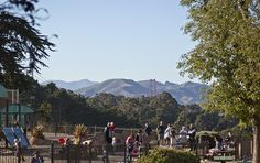 Julius Kahn playground, where children are climbing over structures and playing on slides within in gated area as parents watch, with historic forest in the background and the towers of the Golden Gate Bridge rising behind the trees.