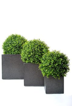 Topiary balls in pots. Premium quality artificial buxus ball set in a granite effect fibreglass cube planter. Suitable for outdoor use. Made in the UK.