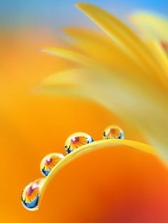 Drops Reflections | Amazing Pictures - macro, droplets with color, high contrast, flowers within the water drops
