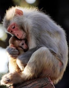 Mother's Day 2013: Pictures of Baby Animals with Moms, Mothers | Teen.com