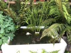Created this water feature about 6 weeks ago. We had a resident frog within a few weeks Belfast Sink Garden Feature, Wilderness Survival, Survival Gear, Container Pond, Butler Sink, Pallets Garden, Back Gardens, Raised Garden Beds, Water Garden