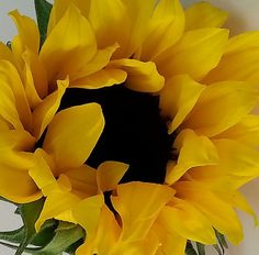 Flowers background photography pictures ideas for 2019 Sunflowers And Daisies, Yellow Flowers, Beautiful Flowers, Sun Flowers, Flor Iphone Wallpaper, Vincent Willem Van Gogh, Sunflower Pictures, Sunflower Garden, Sunflower Wallpaper