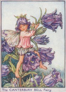 Antique Fairy Print, the Canterbury Bell Fairy