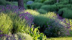 Color Blocking - examples of gardens planted in waves of colors.