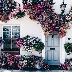 ♕ insta and pinterest @amymckeown5 Love Flowers, Flowers Nature, Most Beautiful Flowers, Summer Flowers, Colorful Flowers, Prettiest Flowers, Cascading Flowers, Wall Flowers, Purple Flowers