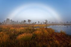 Fog bow by Andrei Reinol (Thursday, 5th September 2013) -- Rare weather condition on early morning in the bog.