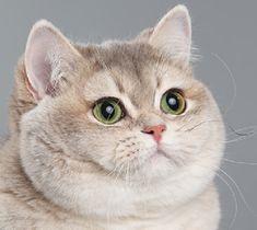 staring-contest cat.