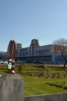 Ears can hop the Harry & David towers in a single bound (or so he thinks). #allears