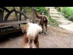 Monkey and dog playing - YouTube