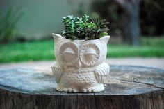 owl planter natural white stoneware by claylicious on Etsy, $28.00