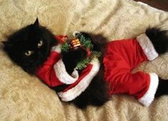 I LOVE this picture! So adorable. Christmas cat:)