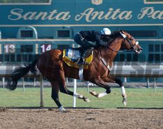 Mucho Macho Man Breeders' Cup horses and connections at Santa Anita near Acadia, California, preparing for Breeders' Cup races on Nov. 1 and Nov. 2, 2013. Photo by Anne M. Eberhardt