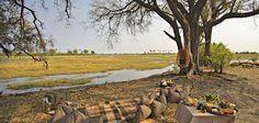 picnic on safari - Google Search Cloud 9, Safari, Picnic, Africa, Google Search, Painting, Art, Art Background, Painting Art