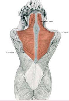 Stretching collo e schiena