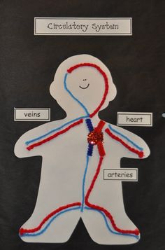 My kids LOVE making this science & art project! It's an accordion book featuring 6 of the body systems using common arts and crafts supplies. It's a really cool visual when it's all finished! (Ideas templates and labels are included for the digestive c Body Preschool, Preschool Science, Teaching Science, Science Art, Science For Kids, Science Activities, Science Projects, Science And Nature, Human Body Science