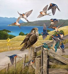 Art by the Sea art gallery specializes in fine NZ arts and crafts, with a huge range of original, fine New Zealand and Maori arts and crafts. Native Drawings, Wildlife Tattoo, Bird Artists, New Zealand Art, Nz Art, Maori Art, Bird Artwork, Animal Paintings, Bird Paintings