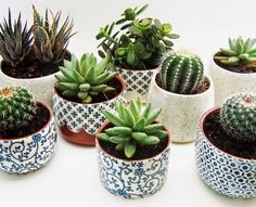 Succulents in lovely containers (somewhat obsessed with succulents right now)
