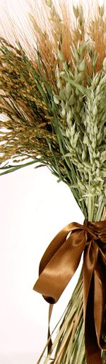 Dried grasses are as pretty as dried flowers. Vanessa would like these