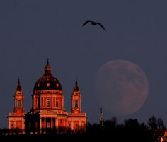 The Moon, the Basilica and the Bird by Stefano De Rosa