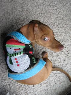No one escapes the Ugly Christmas Sweater! #dachshund