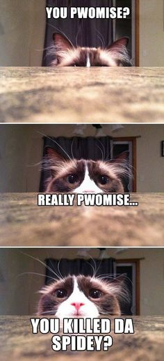 Funny Animals - Cat