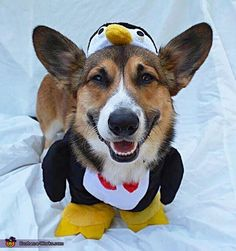 Penguin Dog Halloween Costume
