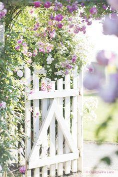 English Roses Gate, David Austin Rose Garden, England, by Georgianna Lane Rosas David Austin, David Austin Rosen, Garden Cottage, Rose Cottage, Pink Garden, Dream Garden, The Secret Garden, White Picket Fence, Picket Gate