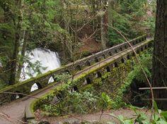 Bridge at Whatcom Falls Park-Bellingham, WA Bellingham Washington, Places In America, Autumn Park, Falls Park, Pacific Northwest, Senior Pictures, Places Ive Been, Trip Advisor, Paths