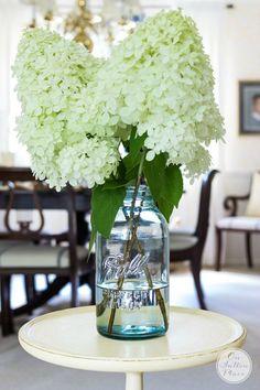 Growing Limelight Hydrangeas - On Sutton Place Hydrangea Vase, Hydrangea Bloom, Limelight Hydrangea, Hydrangea Garden, Hydrangeas, Diy Flowers, Flower Vases, Wedding Flowers, Flower Bouquets