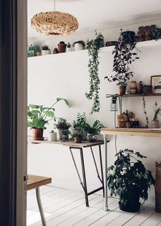 A green and plant filled workspace.