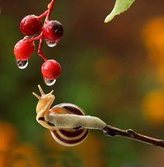 COSMESI NATURALE: Miracolo della Natura: la Bava di Lumaca...Lifting...