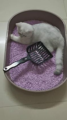 To review our heavy duty large cat litter scoop, contact us via email: services@petduro.com. Follow us for more funny cute cat videos and high quality products for cats and dogs. Funny Cute Cats, Cute Cat Gif, Acupressure Points For Headache, Cute Boyfriend Pictures, Cute Little Drawings, Kinds Of Cats, Cat Supplies, Litter Box, Betta
