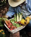 SouthernStates.com: Vegetable Seed Catalog – Farmer Quality Veggie, Fruit & Herb Seeds