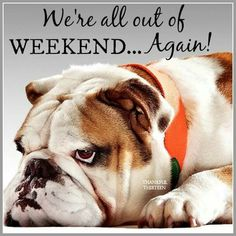 quincy models mungo and maud for mulberry dog collection Weekend Quotes, Good Morning Quotes, Morning Memes, Monday Blessings, Funny Dog Memes, Dog Travel, Dry Dog Food, Dog Quotes, Friend Quotes