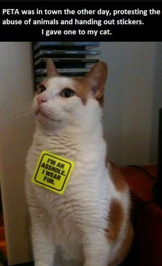 PETA was in town the other day, protesting the abuse of animals and handing out stickers. I gave one to my cat.