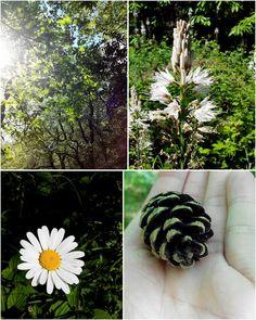 forêt de Touffou, balade, Le Bignon, fleur, bullelodie http://www.bullelodie.com/2015/05/potins-146.html