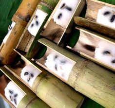 Khao Lam: Bamboo Tubes of Sweet Custardy Sticky Rice). ข้าวหลาม