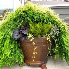 Upon thorough analysis of environmental conditions such as daily and seasonal sun-exposure, surrounding architecture and landscape, and of course, your personal style, an appropriate container garden design is created.