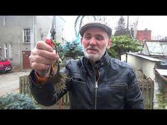 Jak przyciąć Hortensję ogrodową? #zielonepogotowie - YouTube Youtube, Instagram, Flowers, Gardens, Search, Royal Icing Flowers, Flower, Florals, Youtube Movies
