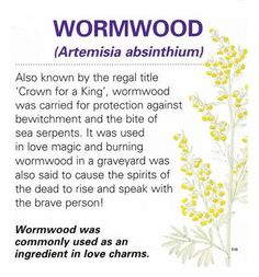 The scent of wormwood is said to increase psychic powers. Burned with incenses on Samhain to aid evocation, divination, scrying and prophecy. Strengthens incenses for exorcism and protection. Hung from a rear-view mirror, wormwood protects vehicles from a Healing Herbs, Medicinal Plants, Natural Healing, Healing Spells, Magic Herbs, Herbal Magic, Witch Herbs, Book Of Shadows, Herbal Medicine